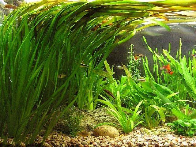 Освещение аквариума устройство выбор ламп норма времени яркость
