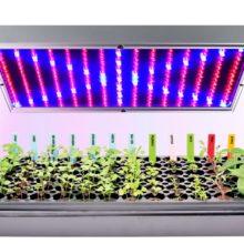 Какую лампу выбрать для растений – лучшие варианты