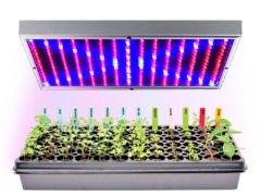 Какую лампу выбрать для растений — лучшие варианты